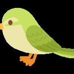 かわいいウグイス(鶯)のイラスト