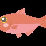 かわいい金目鯛のイラスト