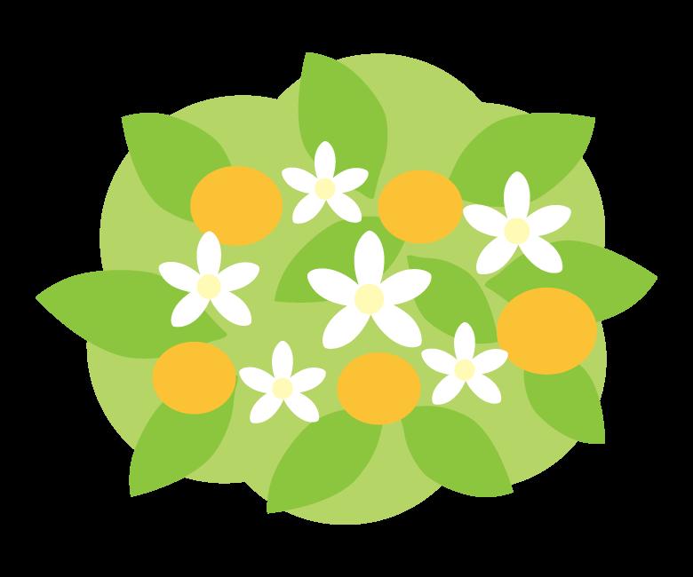 橘(タチバナ)のイラスト