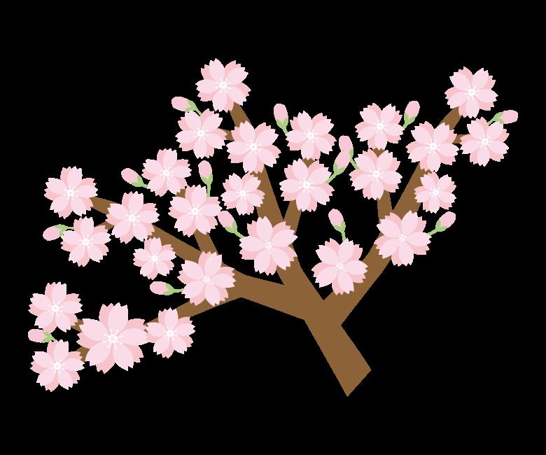 枝と桜のイラスト03