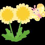 かわいい蝶々とたんぽぽのイラスト