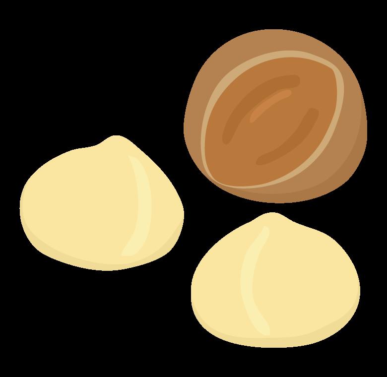 マカダミアナッツのイラスト