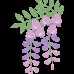 藤の花のイラスト02