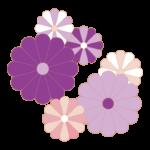 紫色の菊の花のイラスト