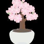 桜の盆栽のイラスト