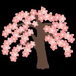 枝垂桜のイラスト