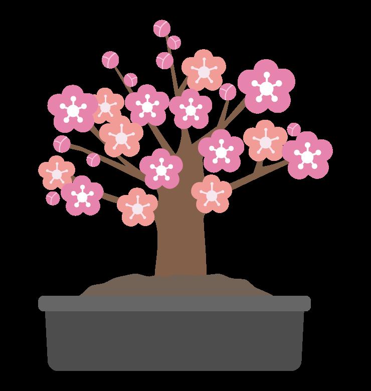 梅の盆栽のイラスト