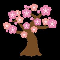 梅の木/梅の花のイラスト