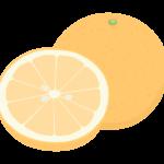 カットされたグレープフルーツのイラスト