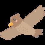 飛んでいるかわいい鷹のイラスト