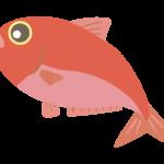 金目鯛のイラスト