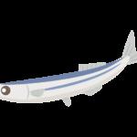 秋刀魚/サンマのイラスト