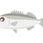 スズキ(魚)のイラスト