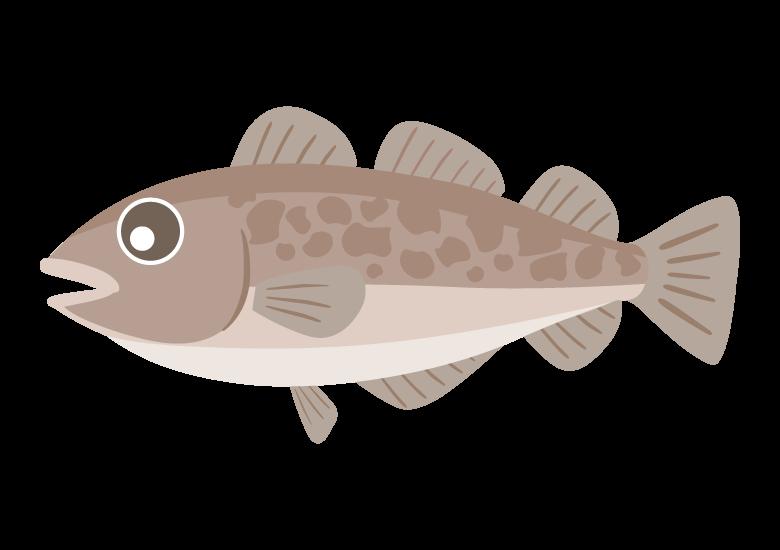 マダラ(真鱈)のイラスト