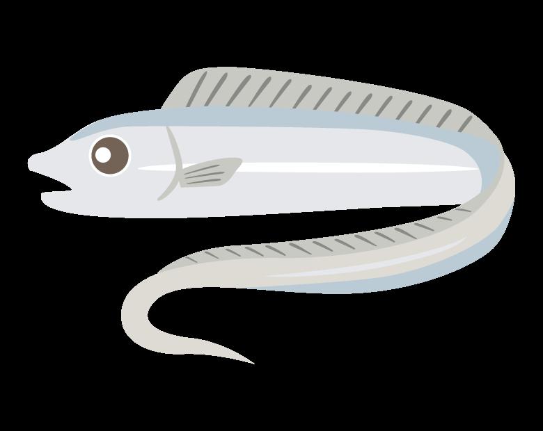タチウオ/太刀魚のイラスト